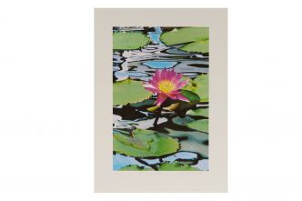 Marina Bay Lily (L)